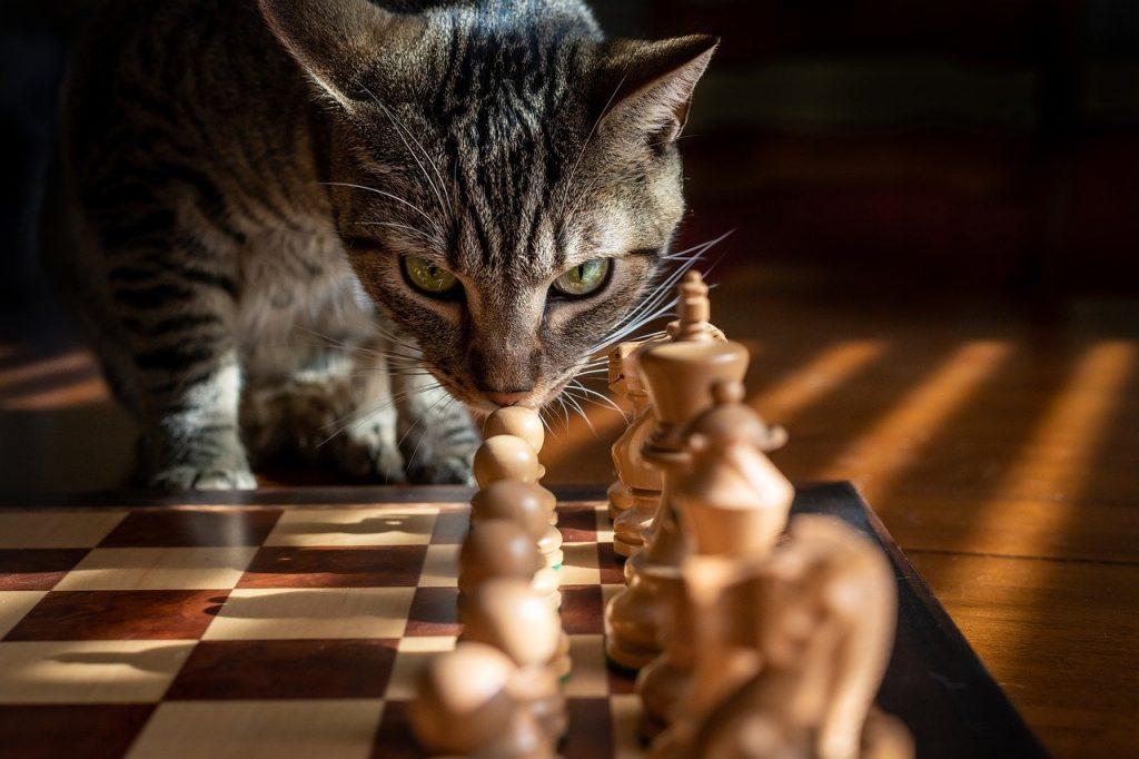 A sakk 1500 éves múltja
